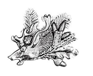Odznak ARTURE hlava jelena s úlomkem, šiškami a dubovým listem 2604